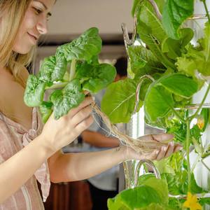 Ο μοντέρνος εσωτερικός «κήπος» που αναπτύσσει ταυτόχρονα έως και 30 φυτά