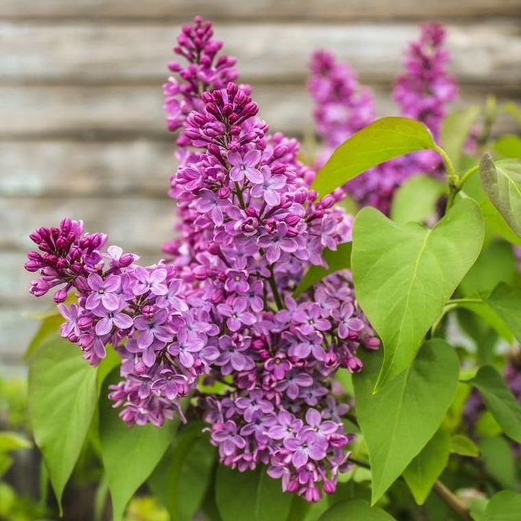 6 φυτά που μπορείς να φυτέψεις το καλοκαίρι και να κρατήσουν τον κήπο σου ολάνθιστο