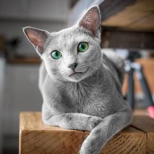 Οι γάτες με τα πιο όμορφα πράσινα μάτια έχουν to δικό τους Instagram account