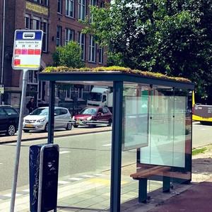 316 στάσεις λεωφορείων στην Ολλανδία μετατράπηκαν σε πράσινα οικοσυστήματα για μέλισσες