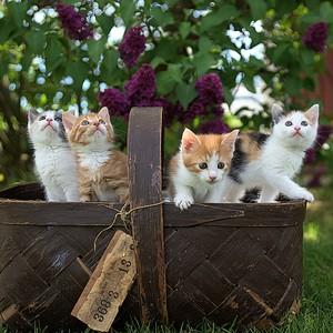 Ένα νέο εμβόλιο βάζει τέλος σε όσους έχουν αλλεργία στις γάτες