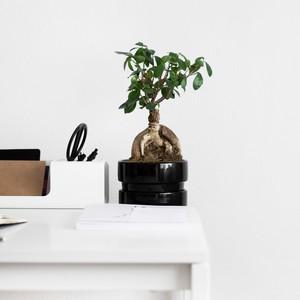9 φυτά που μπορείς να έχεις στο γραφείο σου και δεν χρειάζονται ιδιαίτερη φροντίδα