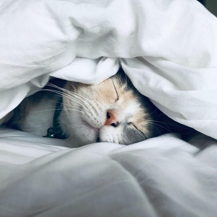 Ο ύπνος με τη γάτα μας, μάς κάνει καλό!