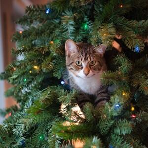 Με αυτά τα tips θα κρατήσεις τη γάτα σου μακριά από το χριστουγεννιάτικο δέντρο σου