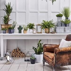 5 ιδέες για να μετατρέψεις το σαλόνι σου σ' ένα υπέροχο κήπο γεμάτο θετική ενέργεια