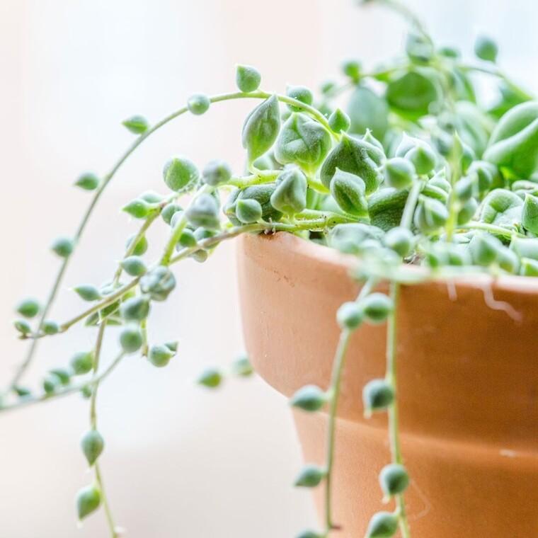 Ο Βοτανικός Κήπος της Νέας Υόρκης προσφέρει online μαθήματα κηπουρικής