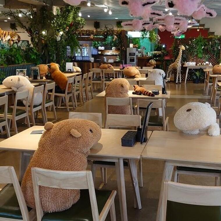 Λούτρινα ζωάκια εξασφαλίζουν την κοινωνική αποστασιοποίηση σε εστιατόριο ιαπωνικού ζωολογικού κήπου